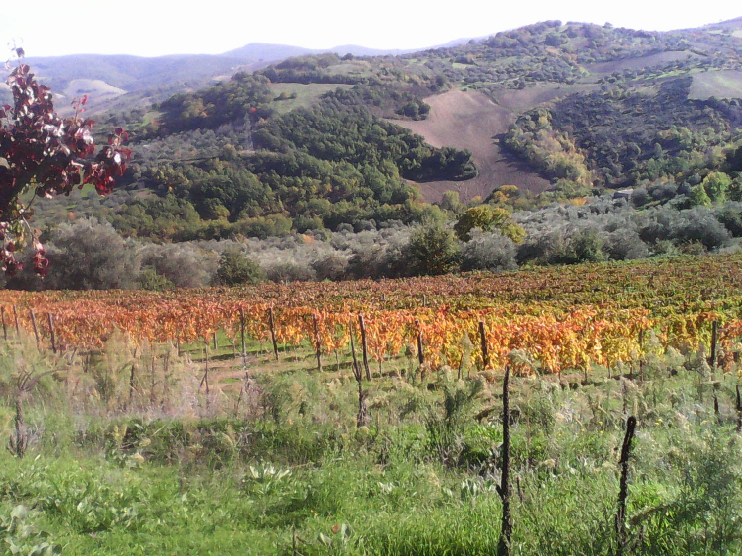 Rionero Tour: Harvest in Basilicata