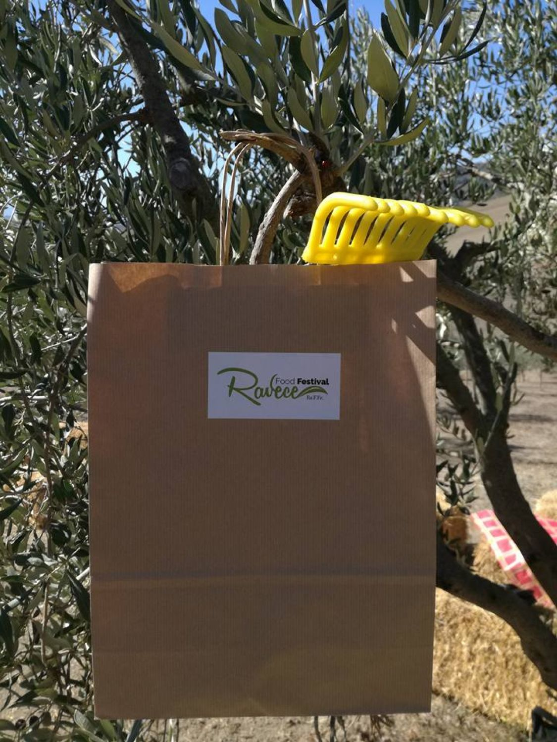 Zungoli Tour: Discovering the Green Gold. The Harvesting and milling of olives in Irpinia